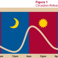 insomnia and cortisol