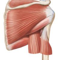 rotator cuff shoulder